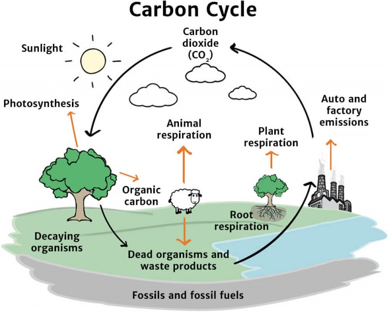 The carbon cycle knowledge bank solar schools carbon cycle ccuart Image collections