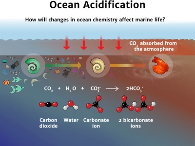 What is Ocean Acidification Diagram