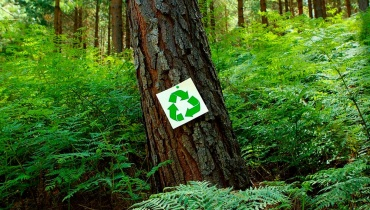 Reduce, Reuse, Recycle Sign on Tree
